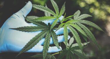 [Rilis Koalisi Advokasi Narkotika untuk Kesehatan] Penyitaan Buku Hikayat Pohon Ganja Bukti Buruknya Pemahaman Apgakum pada Ilmu Pengetahuan dan Hukum Acara Pidana